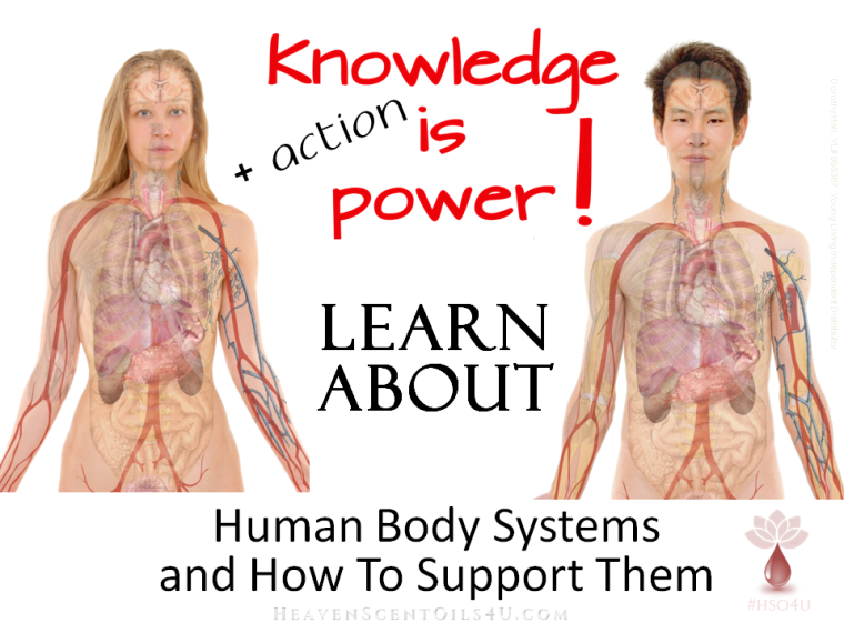 Human Body Systems and How To Support Them